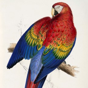 A Passion for Parrots: Edward Lear down under