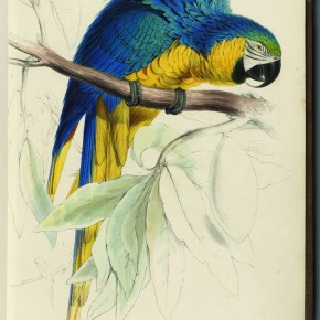 """For the art lover, the naturalist, the child in your life, a new book on Edward Lear"""